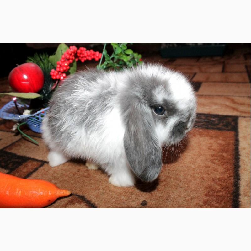 Фото 1/13. Декоративный кролик, лучший подарок вашему ребёнку
