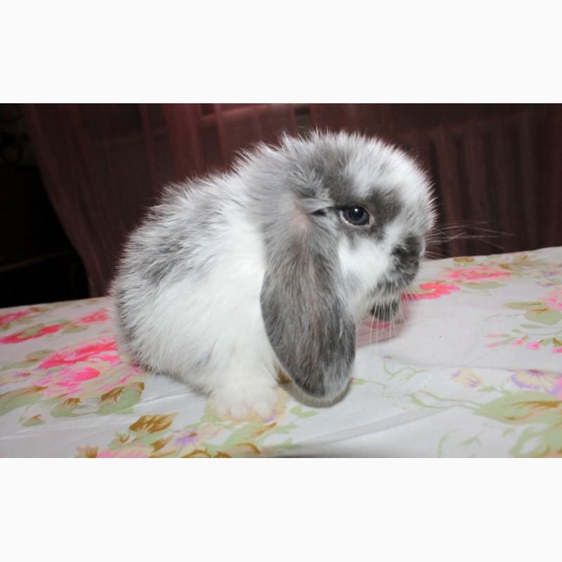 Фото 2/13. Декоративный кролик, лучший подарок вашему ребёнку