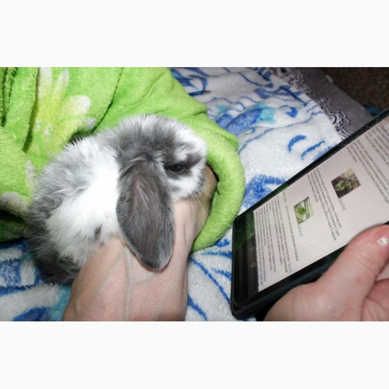 Фото 3/13. Декоративный кролик, лучший подарок вашему ребёнку