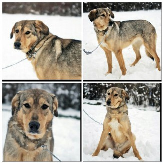 Пэнни-веселая собака в дар