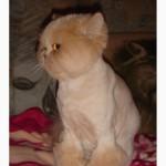 Выездная Стрижка котов, кошек, недорого