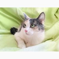 Кошка мурлыка Кассиопея ищет дом