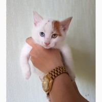 Ищет свою семью и дом котенок Атос