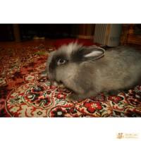 Отдам кролика срочно!!!