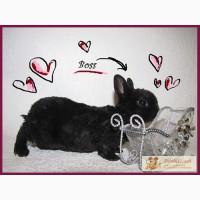 Карликовый крольчонок-рекс