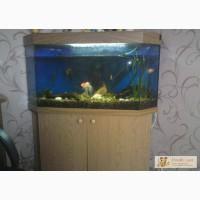 Угловой аквариум в Кемерово