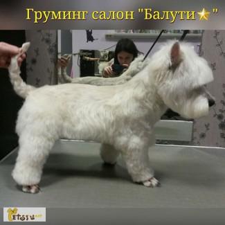 Тримминг жесткошерстных пород собак. Профессиональный салон. Свиблово