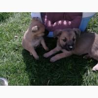 Два маленьких щеночка ищут добрых и ответственных хозяев