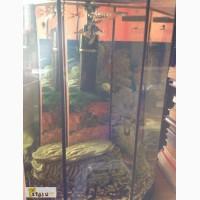 Продам рыбок гуппи в Казани