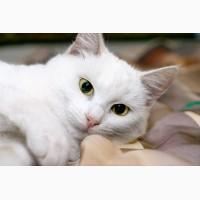 Белоснежка Муся, красавица в снежной шубке в дар