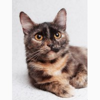 Молоденькая кошечка Тесса ищет дом и семью