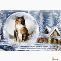 Красивая яркая кошка - богатейка Курильский бобтейл на счастье