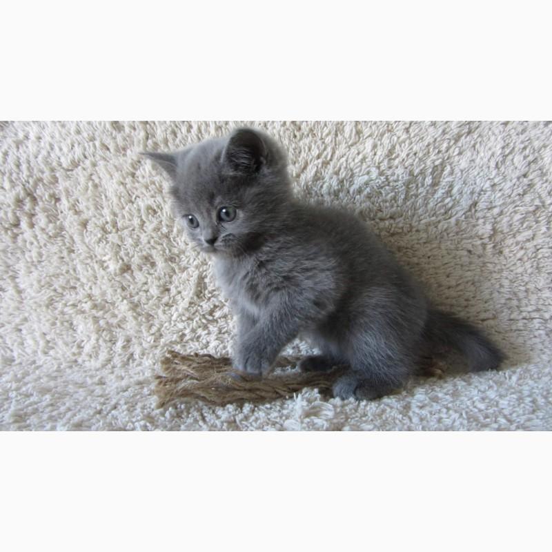 Фото 1/10. Плюшевый британский котенок