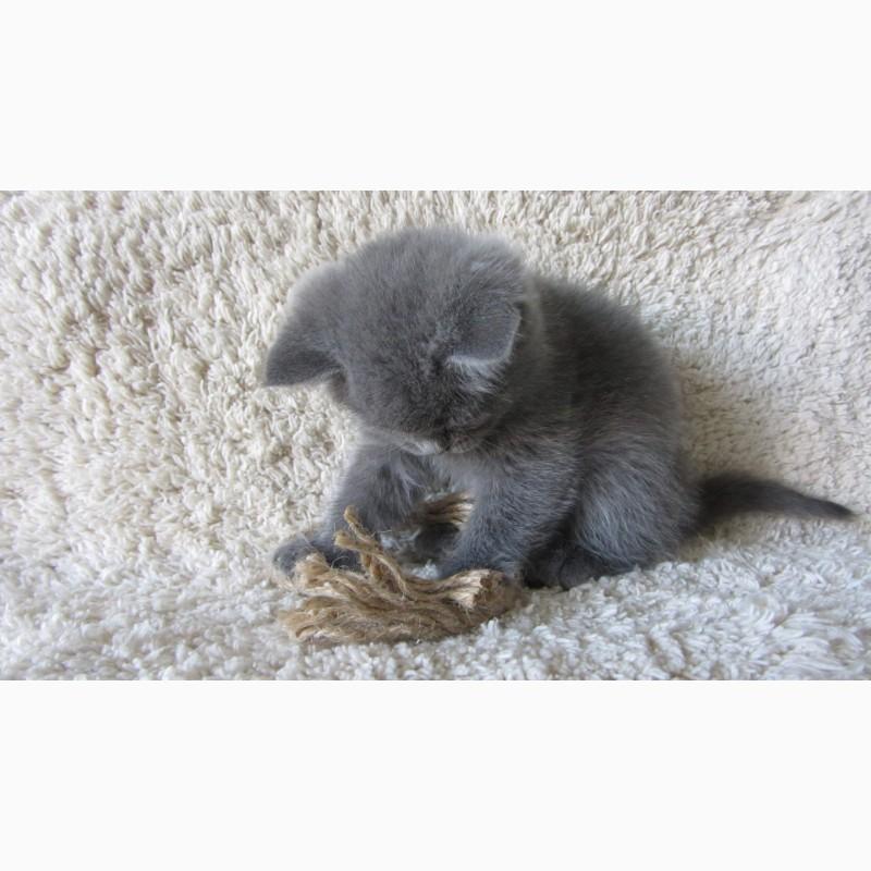 Фото 2/10. Плюшевый британский котенок