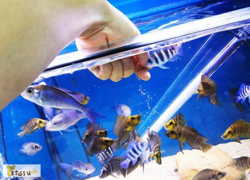 Фото 1/1. Рыбок разных красивых для дома для души! в Москве