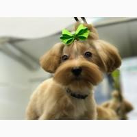 Стрижка собак в Петергофе