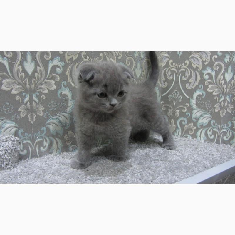 Фото 1/10. Плюшевый вислоухий котенок - мальчик