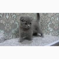 Плюшевый вислоухий котенок - мальчик