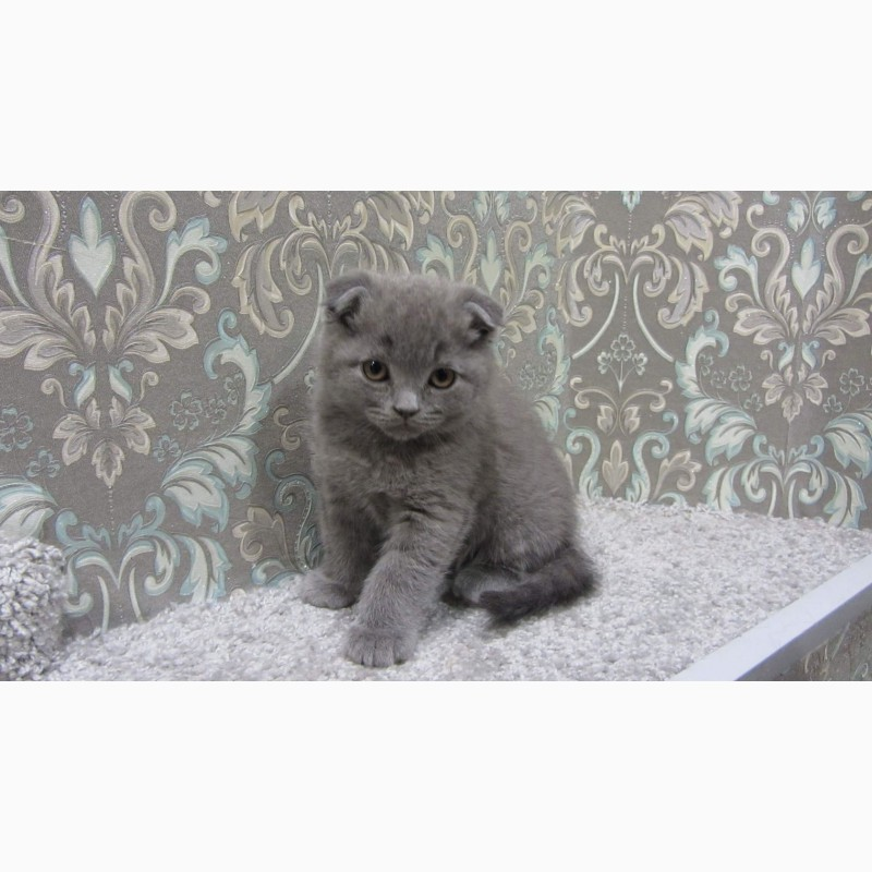 Фото 3/10. Плюшевый вислоухий котенок - мальчик