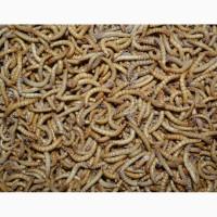 Кормовые насекомые (заморозка)