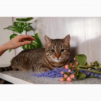 Полосатая кошка Мышка ищет дом