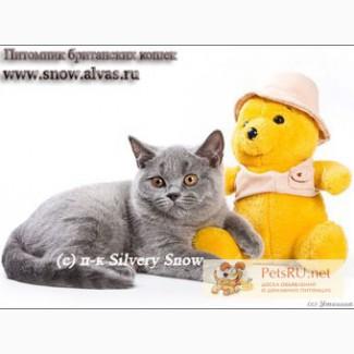 Британские голубые котята из Москвы(доставка)