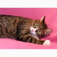 Очень ласковый и дружелюбный котик Елисей в дар
