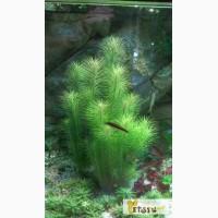 Растения аквариумные в Челябинске
