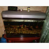 Продам аквариум джебо
