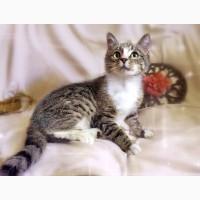 Лучезарный котенок Пиксель в дар