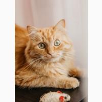 Рыжий красавец Лео ищет дом