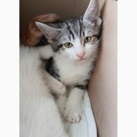 Котенок Арамис - ушастое счастье в дар