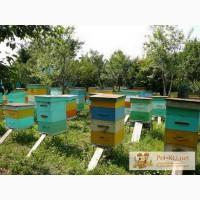 Пчелосемьи приокской породы 160 км. от МКАД по М-5