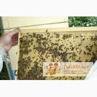 Пчелопакеты карпатка в Омске