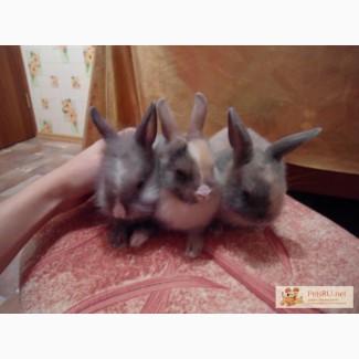 Декоративные крольчата породы лисички!!! Очень ласковые!