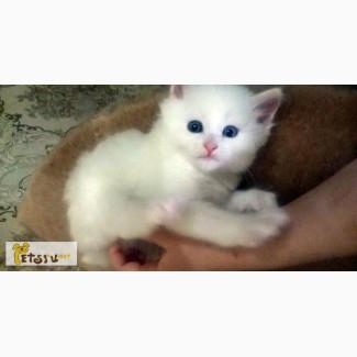 Котятки белые в Челябинске