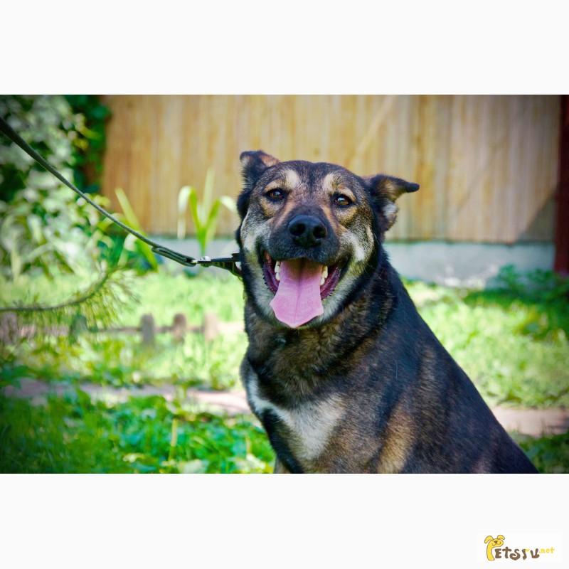 Фото 2/11. Красавица Лола, собака-подружка, лучезарная, послушная ищет дом