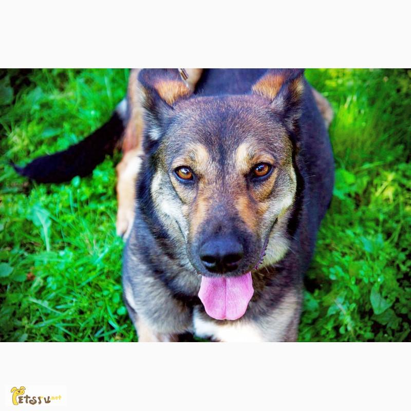 Фото 3/11. Красавица Лола, собака-подружка, лучезарная, послушная ищет дом