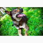 Красавица Лола, собака-подружка, лучезарная, послушная ищет дом