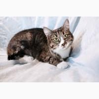 Юная славная кошка по имени Кисуня в дар
