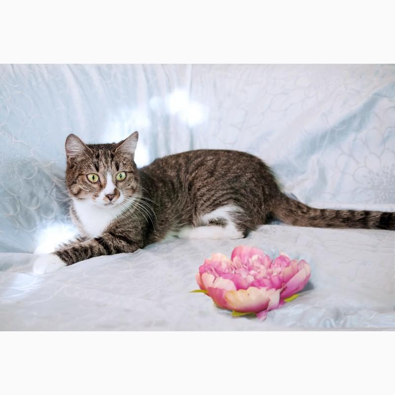Фото 3/7. Юная славная кошка по имени Кисуня в дар