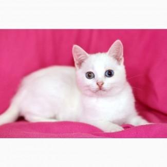 Белая девочка - чудо с голубыми глазами в дар