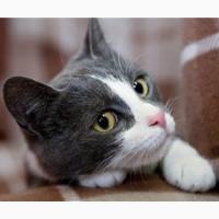 Очаровательная котёнка в голубом Лапушка в дар