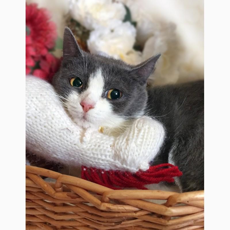 Фото 2/6. Очаровательная котёнка в голубом Лапушка в дар