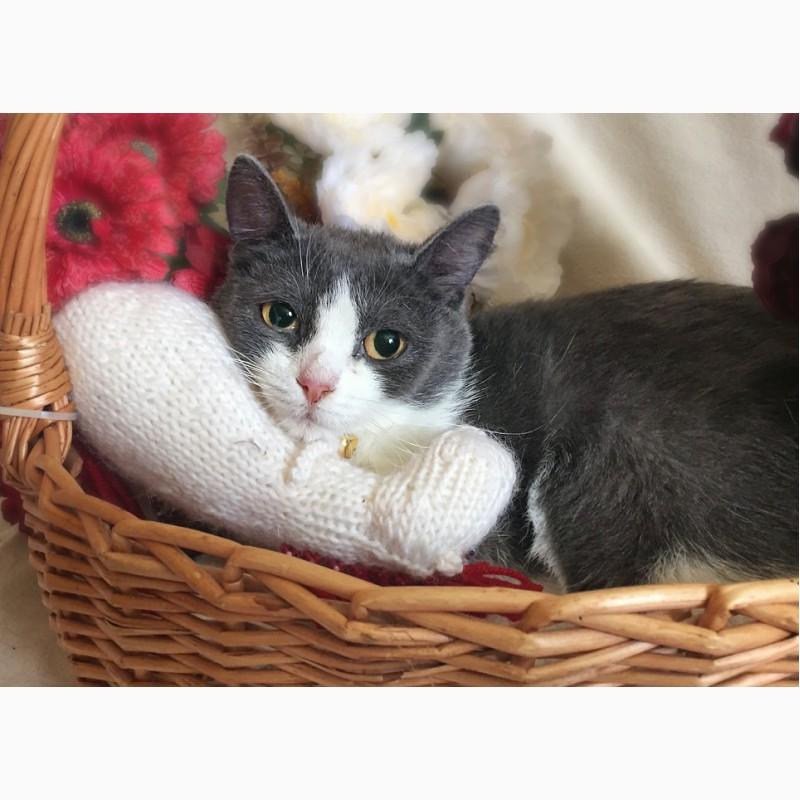 Фото 3/6. Очаровательная котёнка в голубом Лапушка в дар