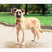Добрая собака Лиса ищет семью