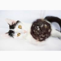 Неповторимая личность котенок Сникерс в дар