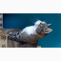 Котик Дружок в дар