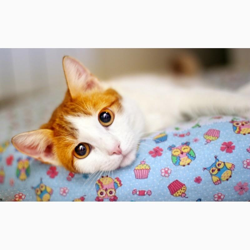 Фото 1/6. Нежный рыжик котенок Ёшка ищет дом