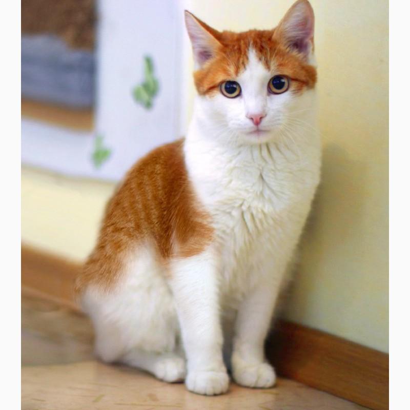 Фото 3/6. Нежный рыжик котенок Ёшка ищет дом
